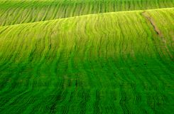 Field with green grass Royalty Free Stock Photos