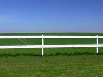 A field of green grass. A field of green grass with bright fence Royalty Free Stock Photography