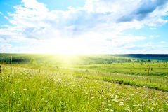 Field of green grass Royalty Free Stock Image