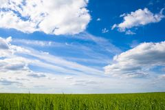 Field of green grass on a background Stock Photography