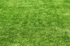 Field green grass background. Royalty Free Stock Images