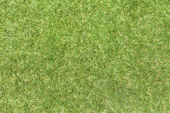 Field green grass background. Royalty Free Stock Photography