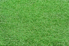 Field green grass background. Stock Images
