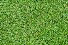 Field green grass background. Stock Photography