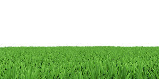 Field of green grass Stock Photos