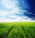 Field of green grass and blue cloudy sky. Nature background, spring morning... field of green grass and cloudy sky Royalty Free Stock Photos