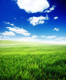 Field of green grass and blue cloudy sky. Spring morning... field of green grass and blue cloudy sky Stock Image