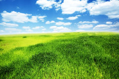 Field of green grass and blue cloudy sky. Spring morning... field of green grass and blue cloudy sky Royalty Free Stock Images
