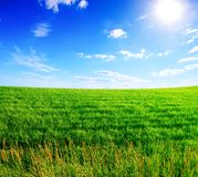 Field of green grass and blue cloudy sky Royalty Free Stock Images