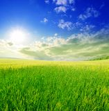 Field of green grass and blue cloudy sky Stock Photo