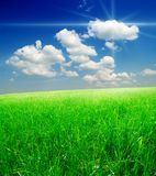 Field of green grass and blue cloudy sky Royalty Free Stock Photo