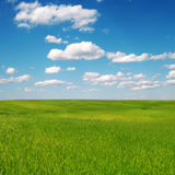 Field of green grass and blue cloudy sky Stock Photography