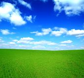 Field of Green Grass and Blue Sky. Field of Green Fresh Grass and Deep Blue Sky Stock Photography