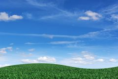 Field with grass and blue sky in the background. Royalty Free Stock Images
