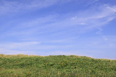 Field of green grass and blue sky Stock Image