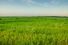 Field of a green grass and blue sky. Green field with hills and the blue sky Stock Photos
