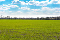 Field with green grass and blue sky Royalty Free Stock Images