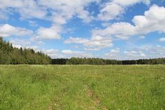 Field of green grass and blue sky in summer day. Forest edge. Field of green grass and blue sky in summer day. Rural road. Forest edge. Russia Stock Images