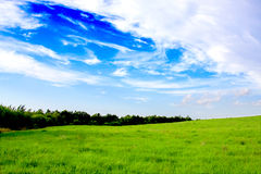 Field of green grass and blue sun sky Royalty Free Stock Photography