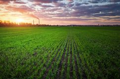Field of green grass and colorful sunset. royalty free stock photos