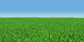 Field of green grass Royalty Free Stock Images
