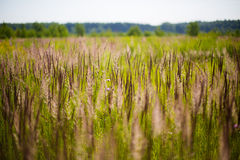 Field of green grass Stock Photography