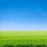 Field of green grass over blue sky Royalty Free Stock Image