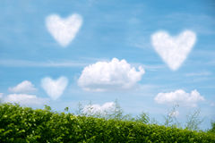Field of green grass over blue sky. With clouds in shape of heart Stock Photo