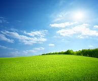 Field of green grass. And perfect sky and trees Stock Photo