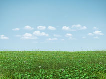 Field of green grass Stock Image