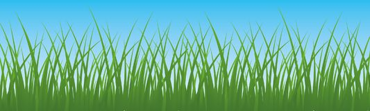 Field, green grass with sky background - vector. Field, green grass with sky background - stock vector Stock Image