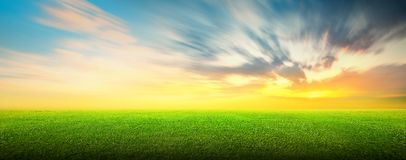 Field of green grass and sky. Field of green grass and beauttiful sky at sunset or sunrise Royalty Free Stock Photography