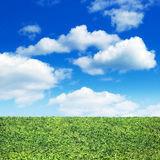 Field of green grass and sky Stock Image