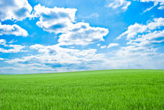 Field of a green grass, sky with clouds Stock Image