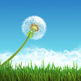 Field of green grass and sky with dandelion. Stock Photos