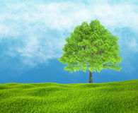 Field of green grass and sky with one tree. Royalty Free Stock Photography