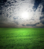 Field of green grass and stormy sky Royalty Free Stock Photos