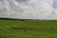 Field of green grass stretches into the distance Royalty Free Stock Photo