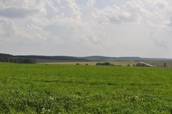 Field of green grass stretches into the distance Royalty Free Stock Image