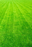 Field of green grass in the summer,