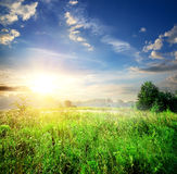 Field with green grass royalty free stock photography