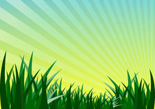Field green grass and sunrise background Royalty Free Stock Photos