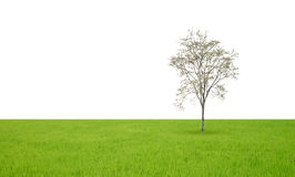 Field with green grass and tree Stock Photos