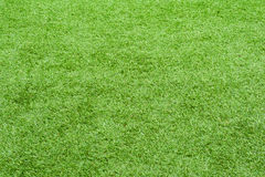 Field green grass for use as nature background. Royalty Free Stock Photography