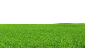 Field with green grass on a white background.  Stock Image