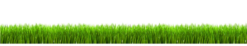 Field, green grass on white background. Vector illustration Stock Photos