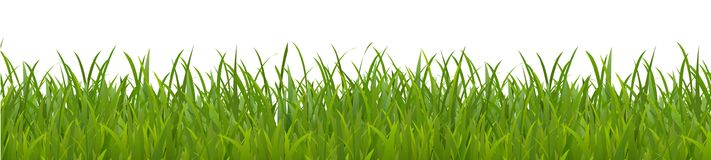 Field, green grass on white background - vector. Field, green grass on white background - new vector illustration Royalty Free Stock Images