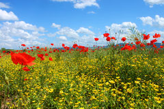 Field with green grass, yellow flowers and red poppies. Against the blue sky stock photos