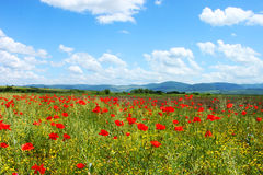 Field with green grass, yellow flowers and red poppies. Against the blue sky royalty free stock image