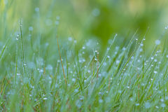Field of green herbs. With water drops Stock Images